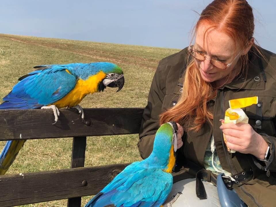 Warum produzieren Sittiche und Papageien so viel Staub?