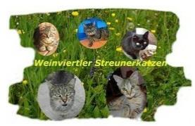 Streunerkatzen Weinviertel