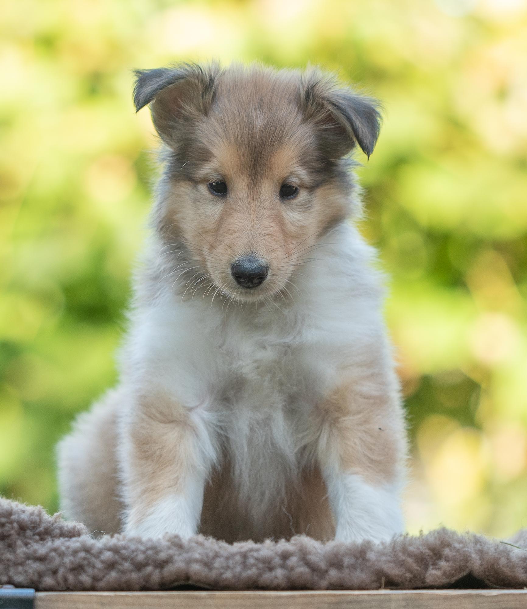 12. Oktober 2019 - Fotografiert von Gaby Brockers (Dogs Cottage Pictures)