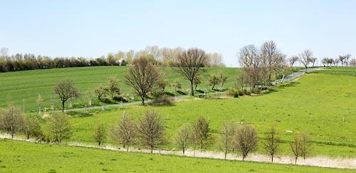 Der Grosse Rat Thurgau fordert ein Gentechnikverbot oder die Verlängerung des Moratoriums um 10 Jahre. Bild: Clipdealer
