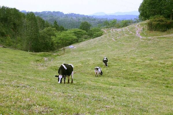 村岡牧場 放牧酪農