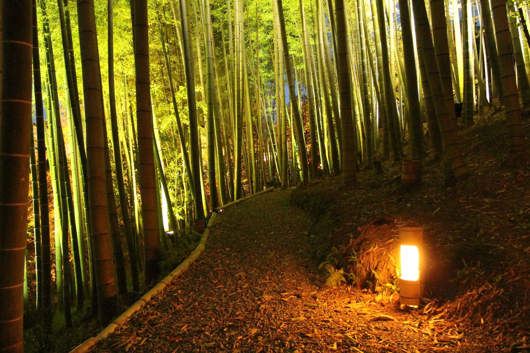 京都市 Kyōto, Kōdaiji