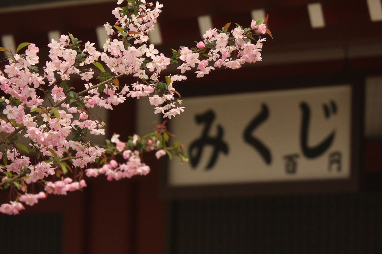 Sakura, Senso-ji, Asakusa, Tōkyō