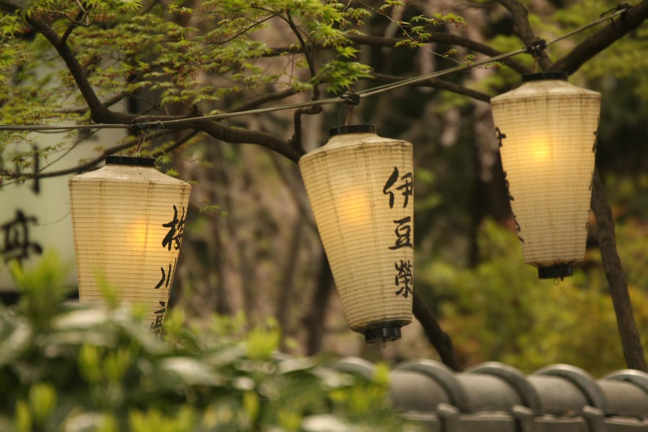 Botan, ToshoGu Shrine, Ueno Park, Tôkyô