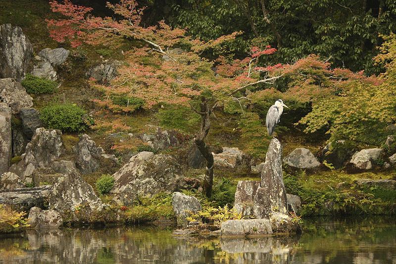 京都,,嵐山, 天龍寺 Kyōto, Arashiyama Tenryū-ji