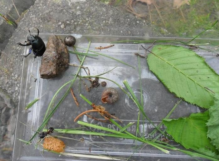 Waldtage - Insektarium