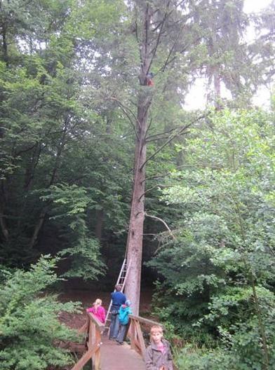 Waldwoche - Klettern