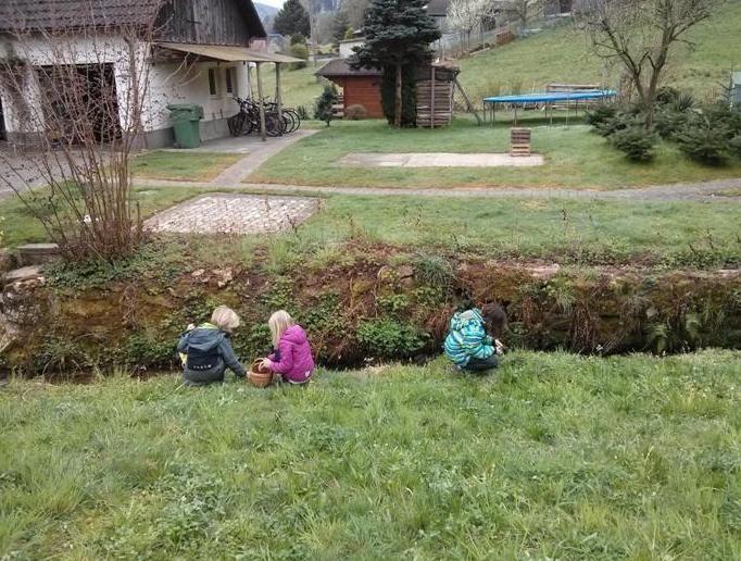 Auf dem Bauernhof - Wildkräuter
