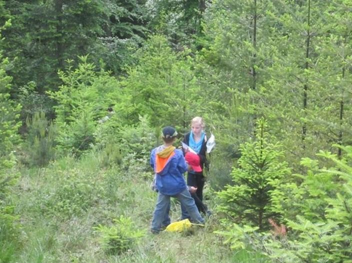 Den Wald erleben - Baumarten