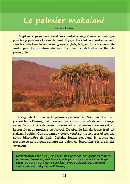 La palmier makalani ; Géologie, faune et flore de Namibie