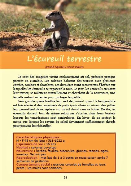 L'écureuil terrestre ; Géologie, faune et flore de Namibie