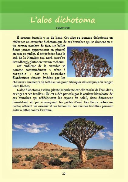 L'aloe dichotoma ; Géologie, faune et flore de Namibie