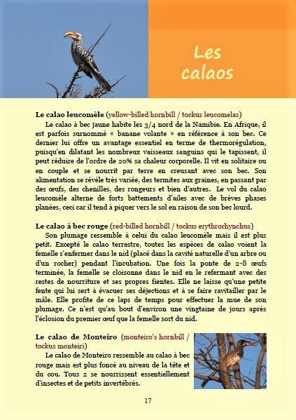Les calaos ; Géologie, faune et flore de Namibie