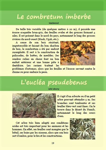 Le combretum imberbe et l'eucléa pseudebenus ; Géologie, faune et flore de Namibie