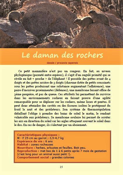 La daman des rochers ; Géologie, faune et flore de Namibie
