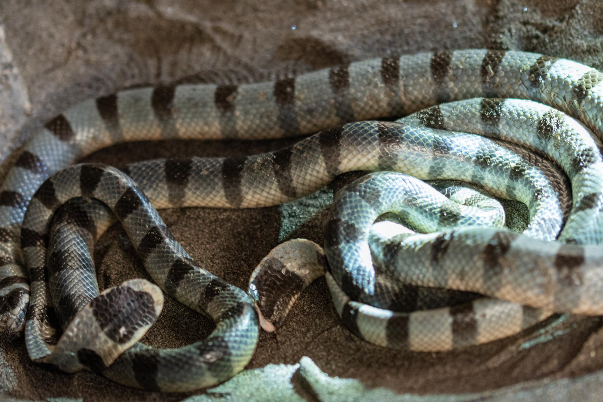 Heilige Wasserschlangen