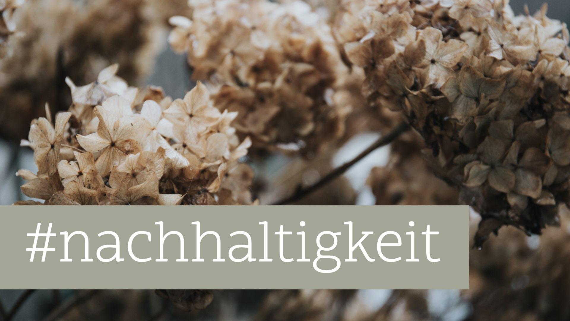 Nachhaltiges Webdesign: Die Onlinewelt nach Greta Thunberg