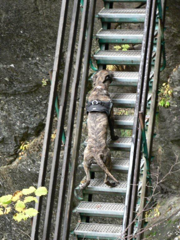2008 - Wer sagt dass nur Frösche die Leiter hoch gehen