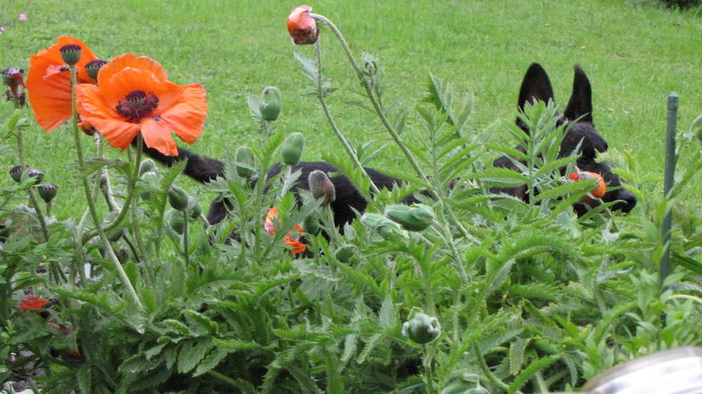 (die hübschen Blumen gibts heute leider nicht mehr... Picon fand, die passen nicht hier her)