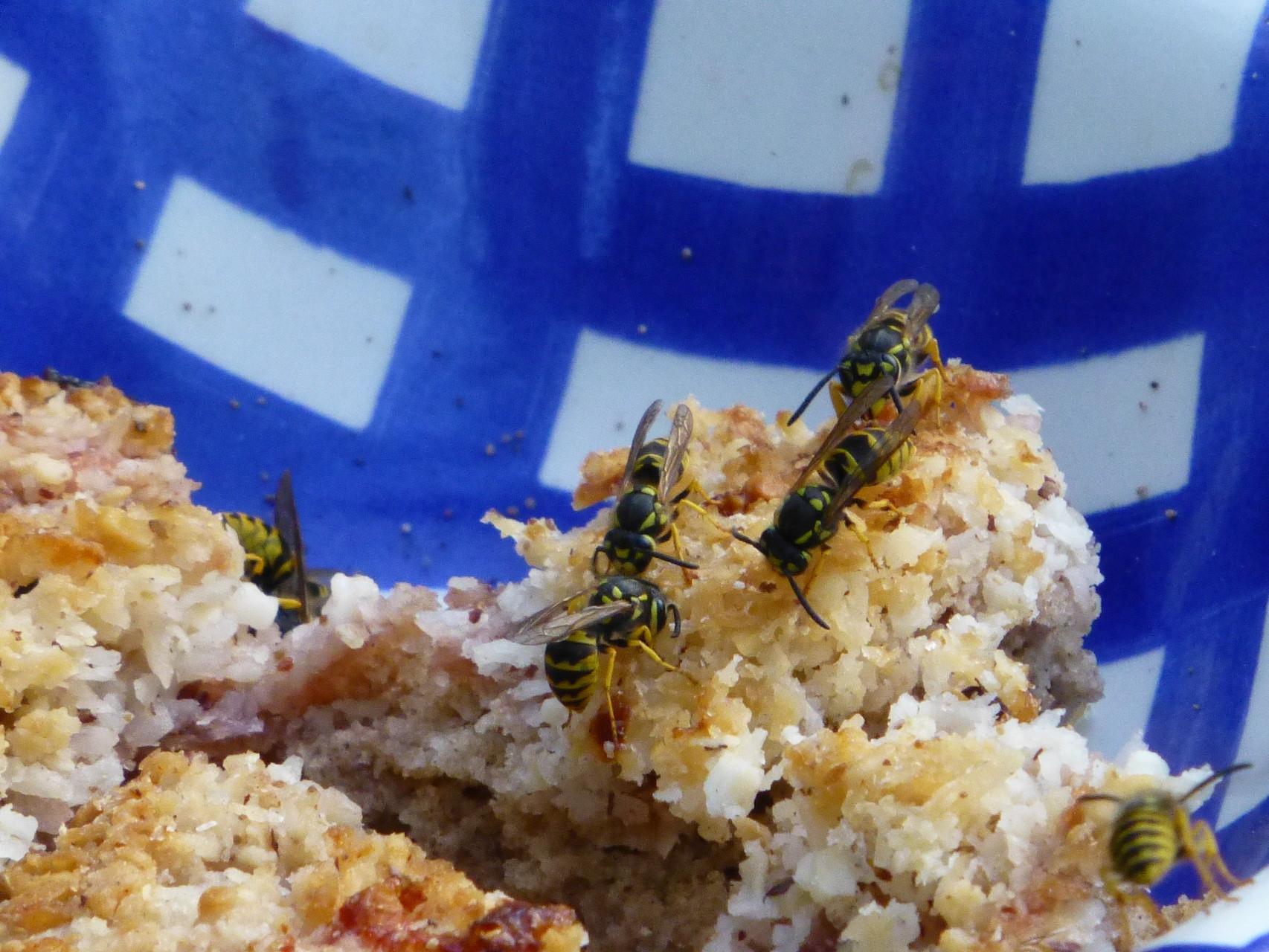 Auch Wespen sind bei uns willkommen.