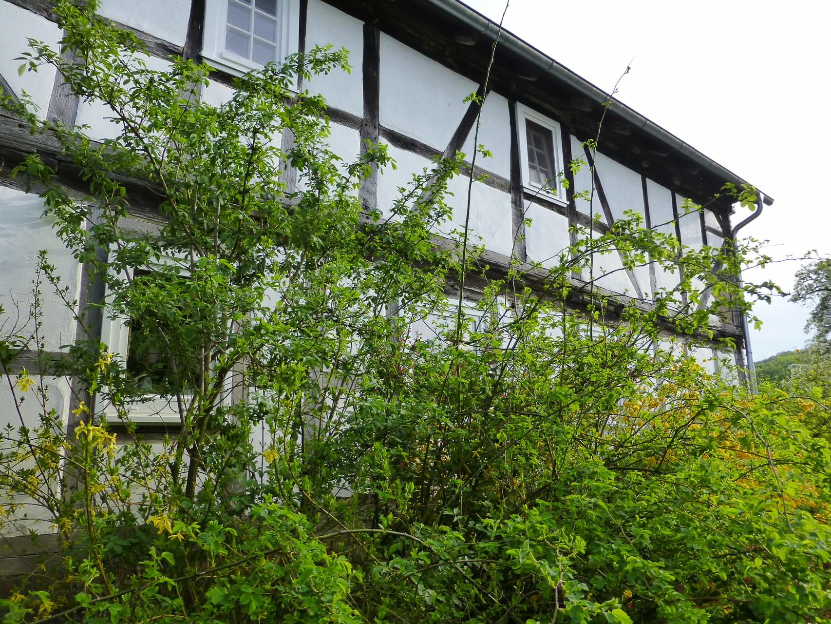 Nordseite Fachwerkhaus