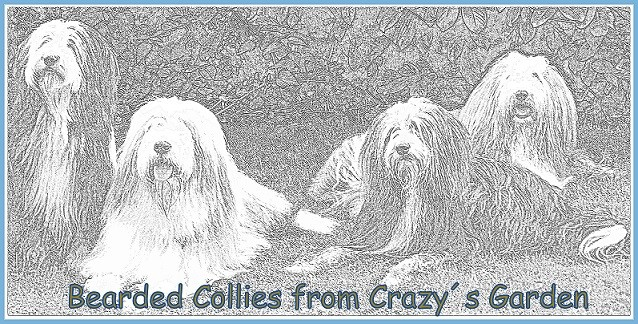 Bearded Collie Züchter