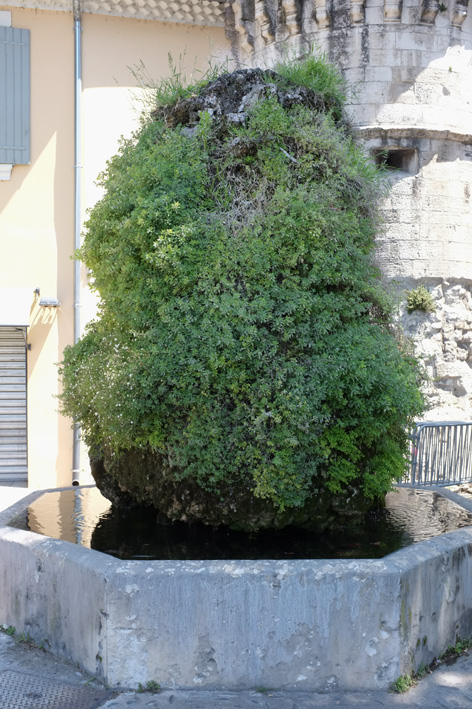 Fontaine moussue in Pernes-les-Fontaines