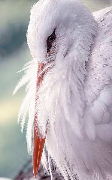 Storch im Vogelpark Walsrode