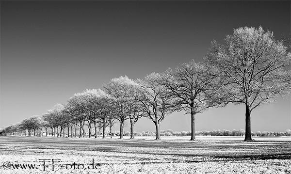 Infrarotfoto der Baumreihe an der Kananoher Straße zwischen Krähenwinkel und Resse