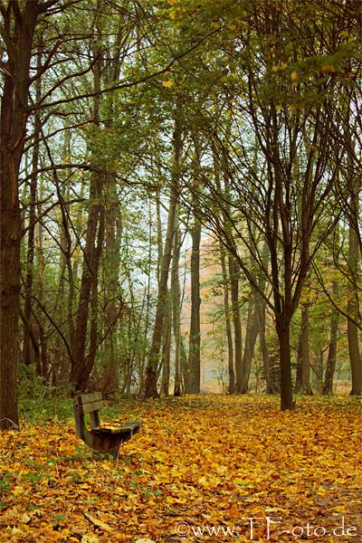 Parkbank im Stadtpark Langenhagen im Herbs