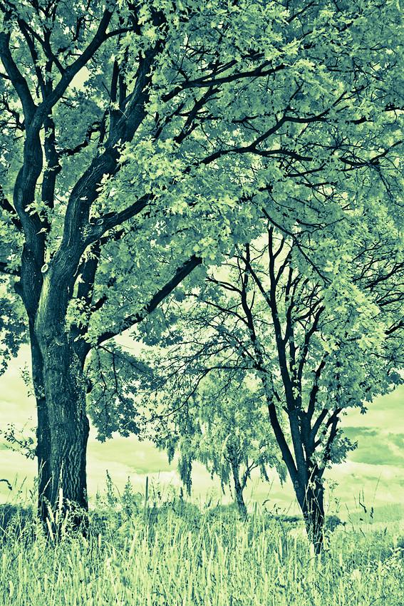 Infrarotaufnahme von Bäumen in Langenhagen