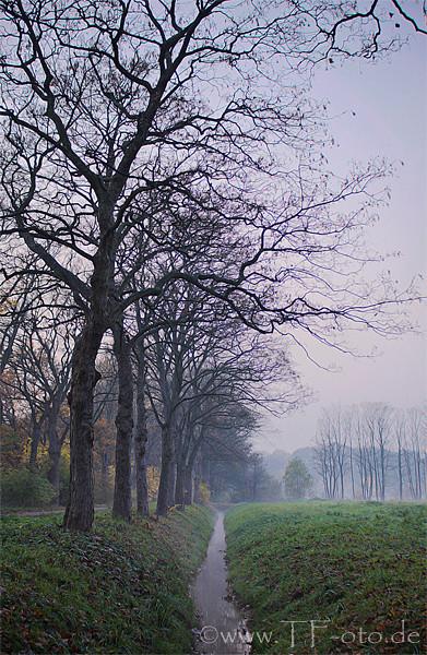 Herbstliche Bäume bei aufziehendem Nebel im Stadtpark Langenhagen