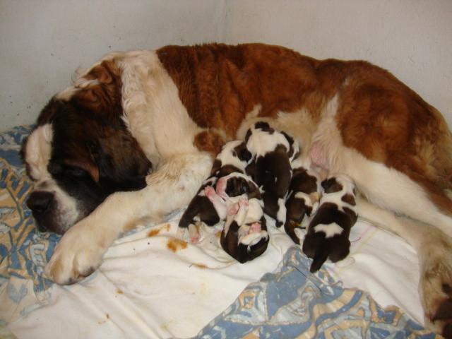 Fiora et sa portée (1 jour) née le 14 février,