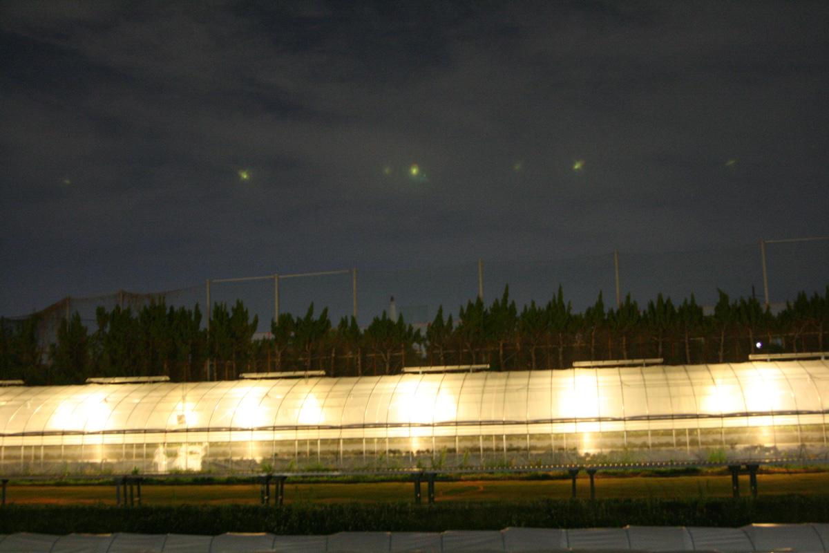 夜のビニールハウスは本当に幻想的なんです!