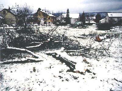 Gerodete Streuobstwiese in Berkheim Foto: D.Francke