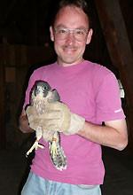 R. Hilzinger setzt den Falken in den Nistkasten. Foto: NABU/C. Reimers