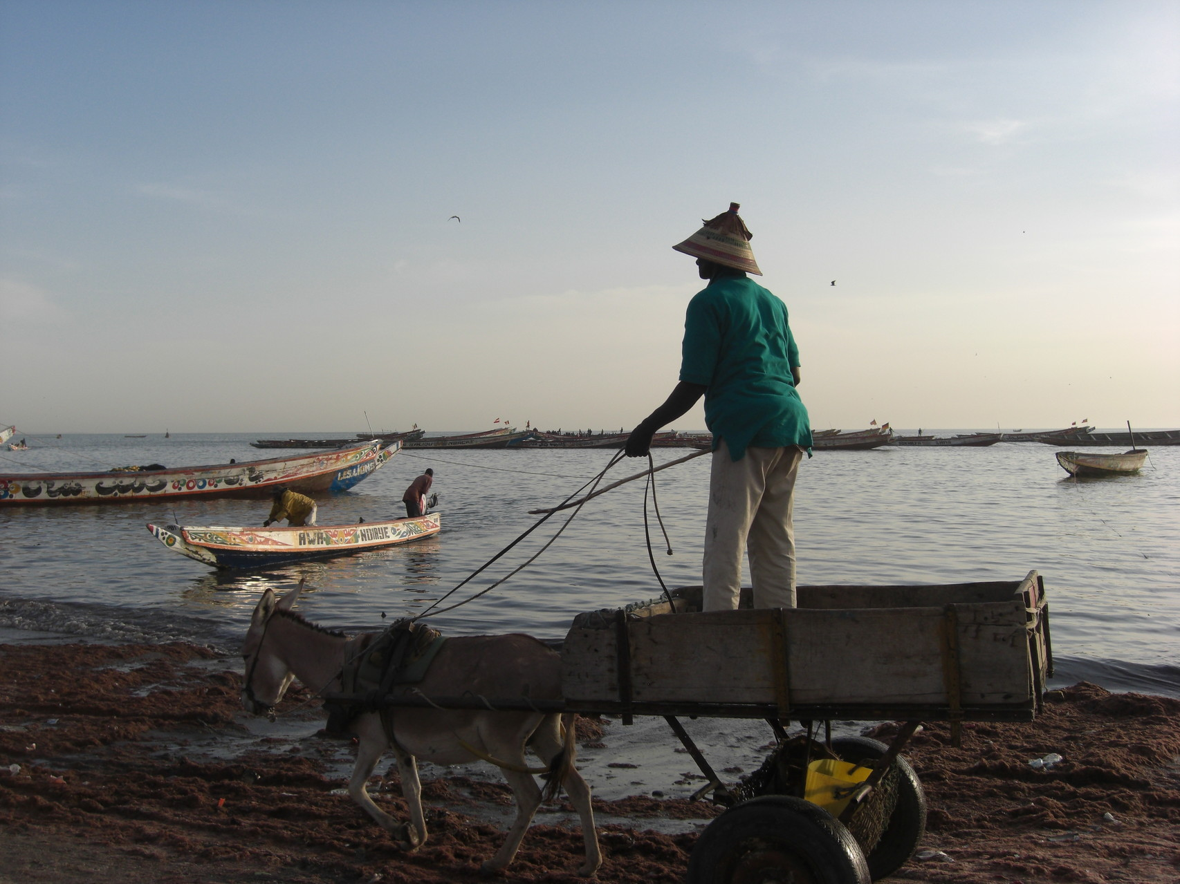 Livreur de poisson, en route pour le marché !