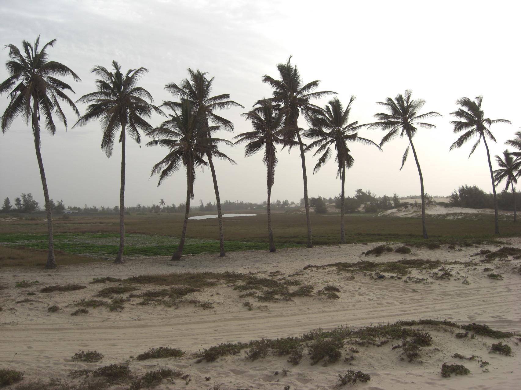Les palmiers entre le lac rose et la plage du Paris-Dakar