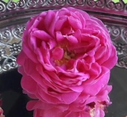 Rose - Symbol der Liebe und Harmonie