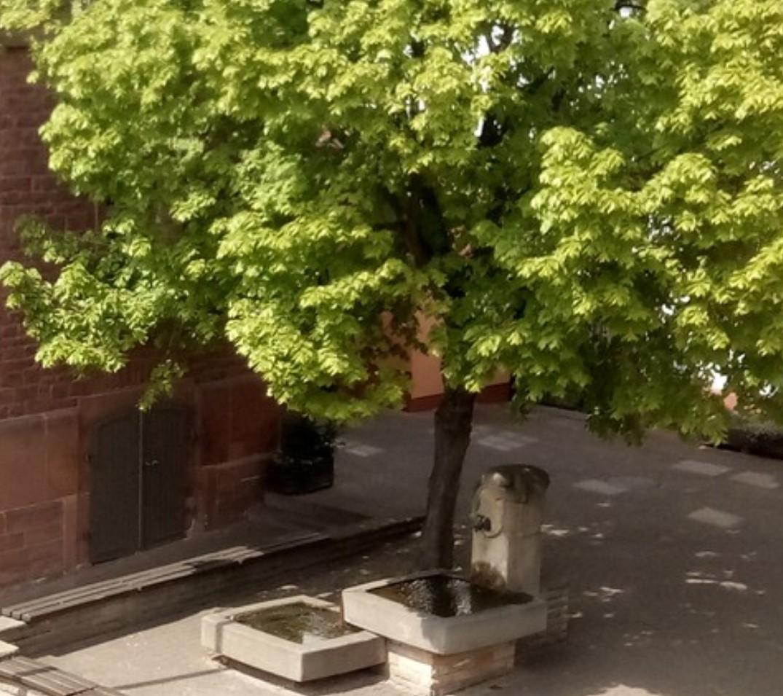 Blick aus dem Wohnzimmer auf den Dorfplatz
