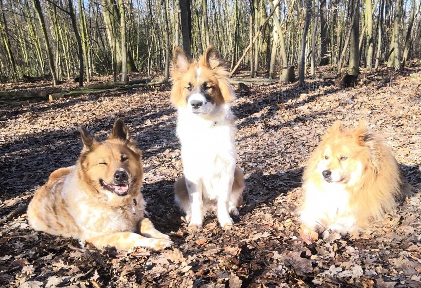 Waldspaziergang mit Oma und Tante