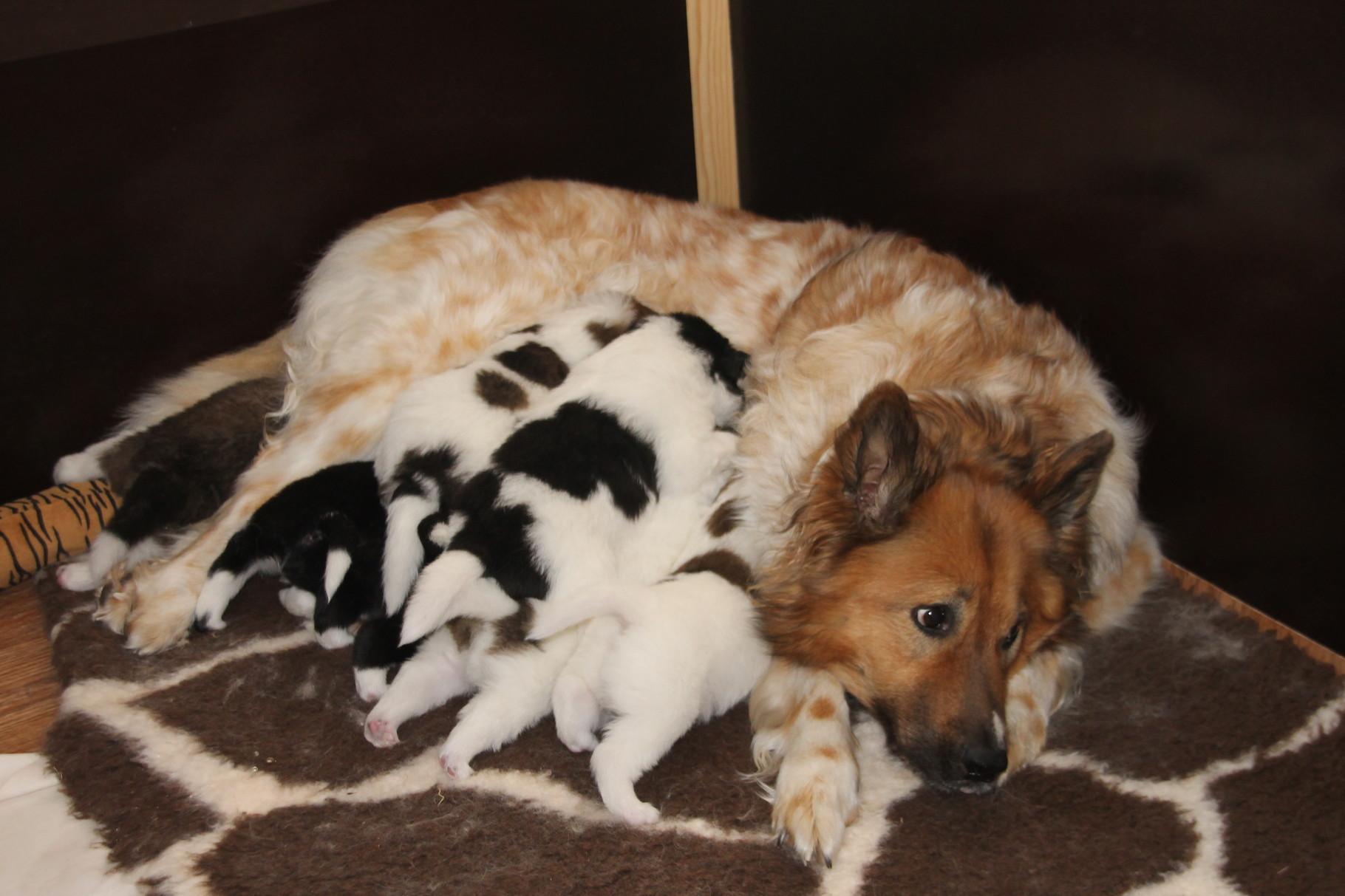 und säugende Mamas müde