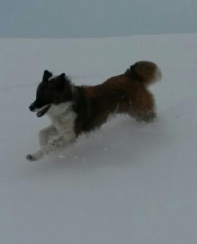 Balino im Schnee-Flug!
