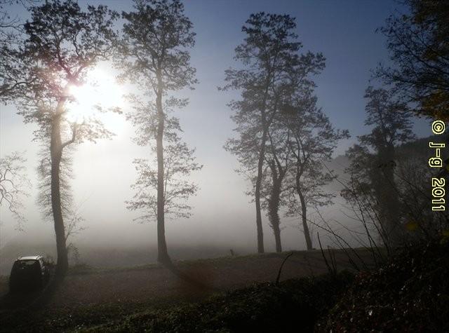 Herbst-Nebel