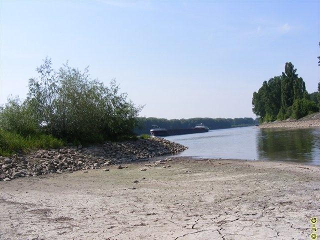 Mündung des Altrheins in den Rhein