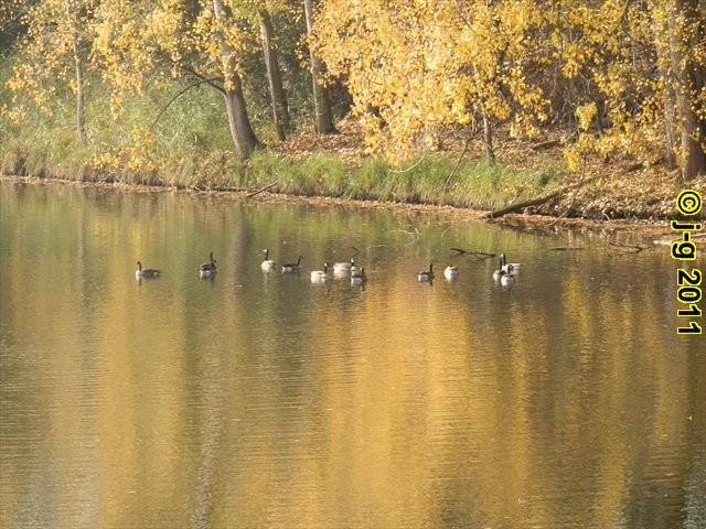 im NSG Biedensand im Herbst