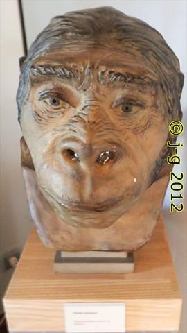Rekonstruktion eines Homo heidelbergensis