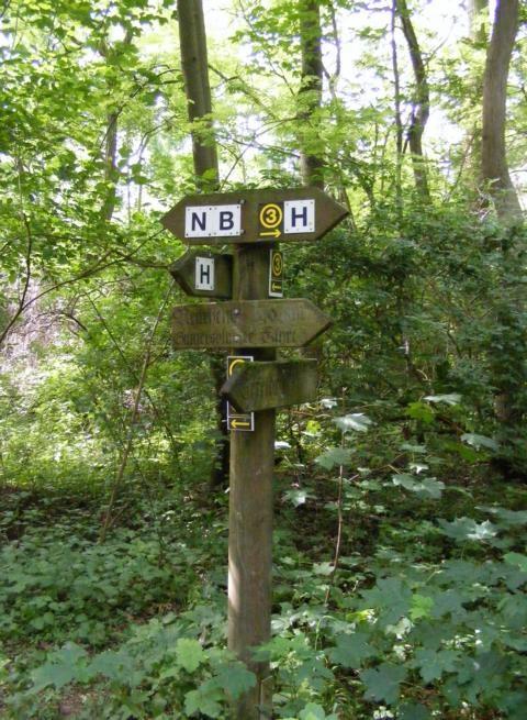 im NSG Kühkopf-Knoblochsaue - Wanderwege