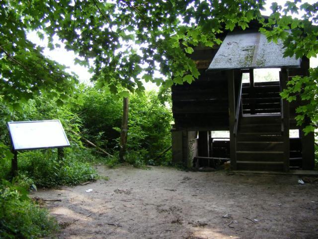 im NSG Kühkopf-Knoblochsaue - Aussichtspunkt