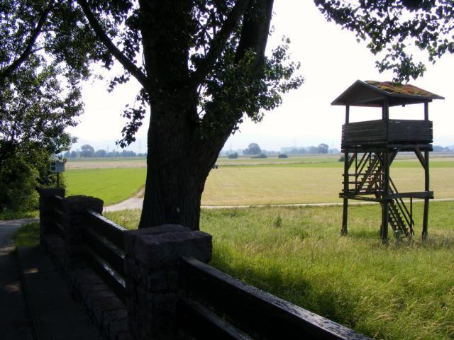 NSG Weschnitzinsel - Herrnbrücke (mit Beobachtungsturm)